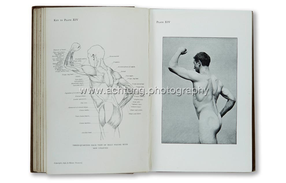 Arthur_Thomson_Handbook_of_anatomy_for_art_students_Oxford_at_the_Clarendon_press_1896_p06