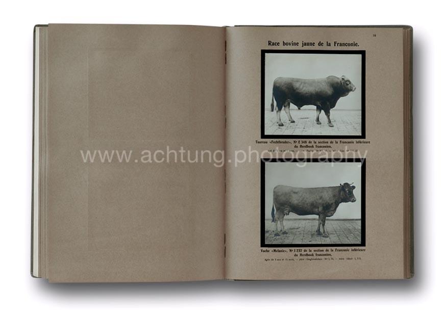 Animaux_Domestiques_Races_Allemandes-1912_03