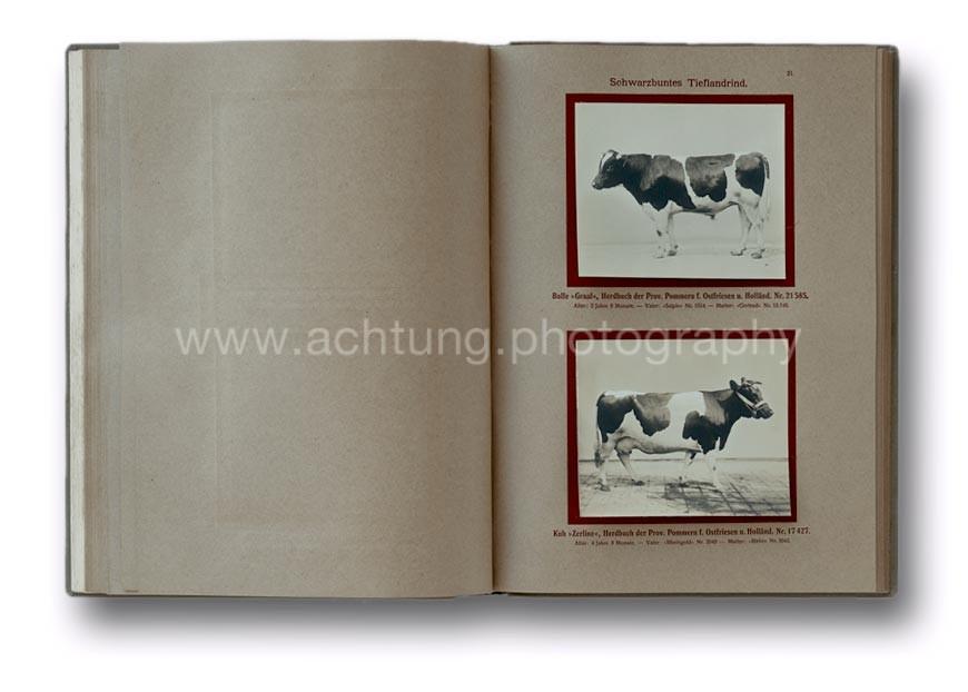 Deutsche_Tierrassen_1912_25
