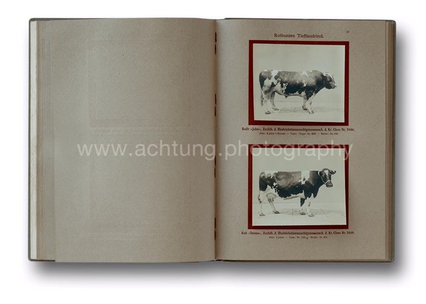 Deutsche_Tierrassen_1912_26