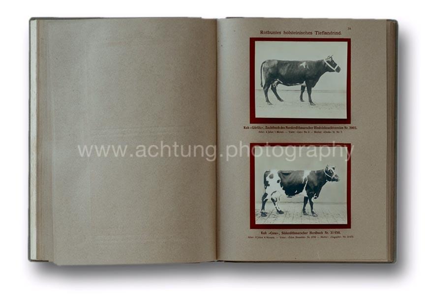 Deutsche_Tierrassen_1912_28
