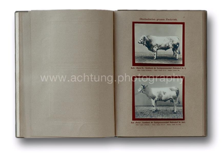 Deutsche_Tierrassen_1912_31