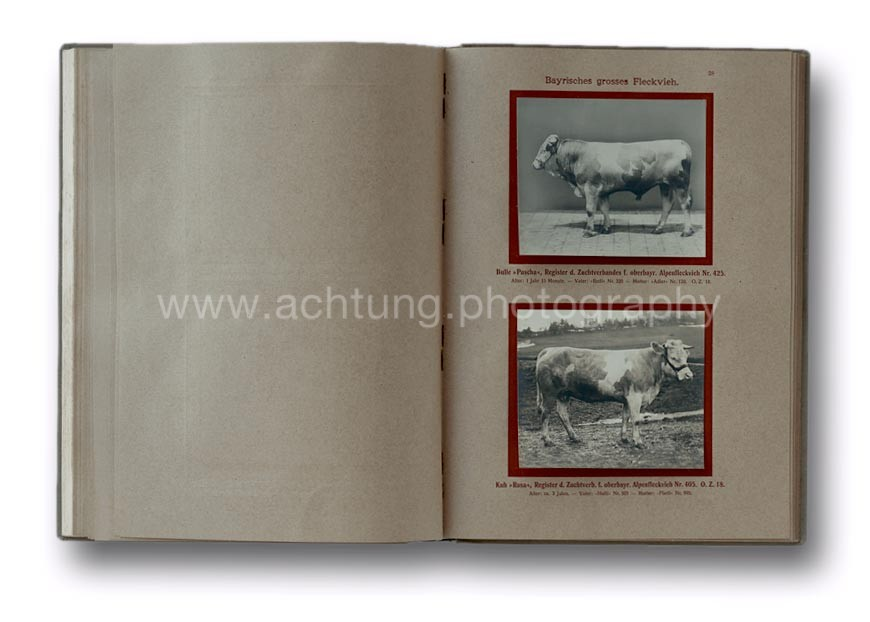 Deutsche_Tierrassen_1912_32