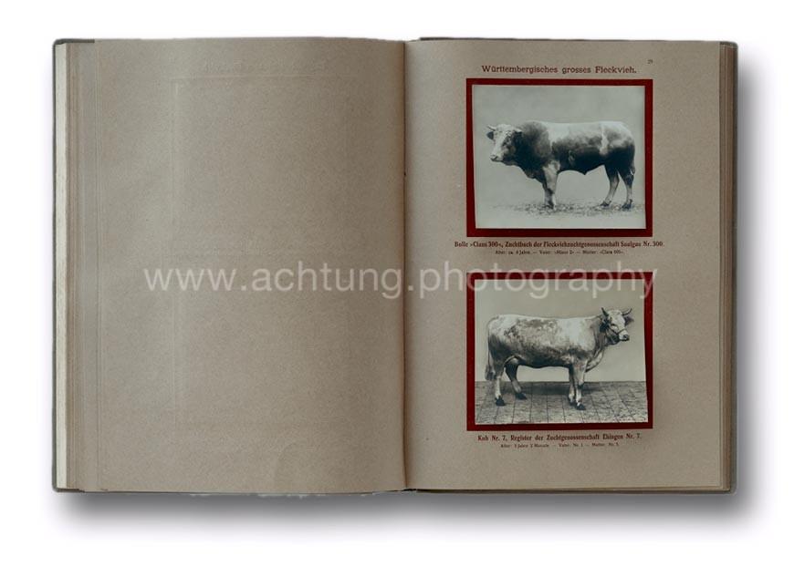 Deutsche_Tierrassen_1912_33