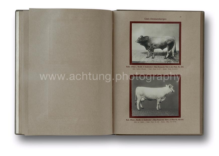 Deutsche_Tierrassen_1912_37