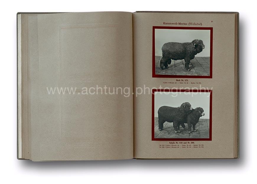 Deutsche_Tierrassen_1912_40