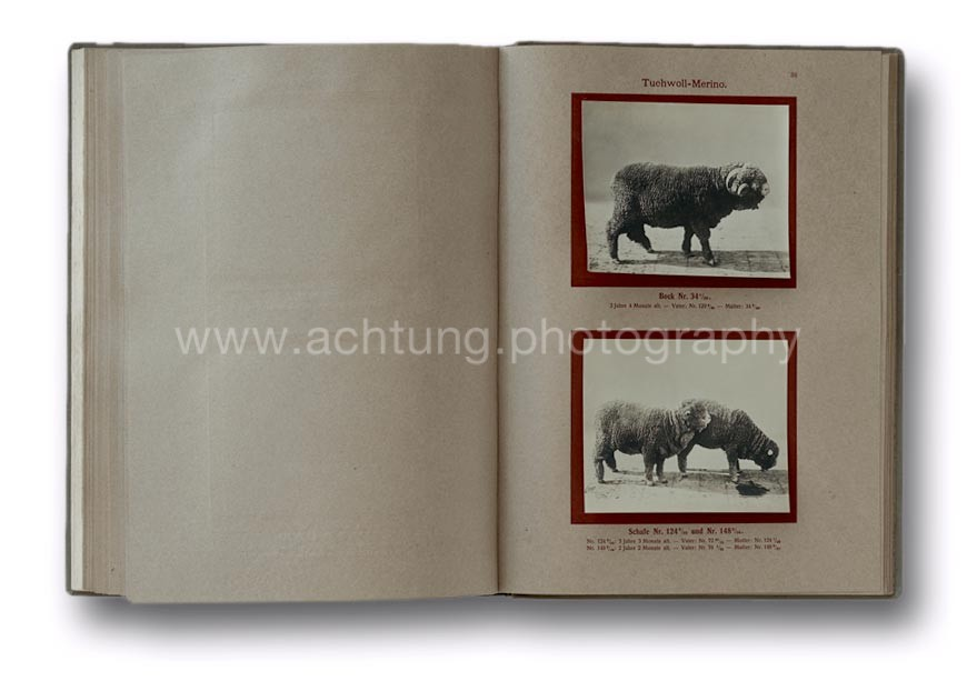 Deutsche_Tierrassen_1912_41