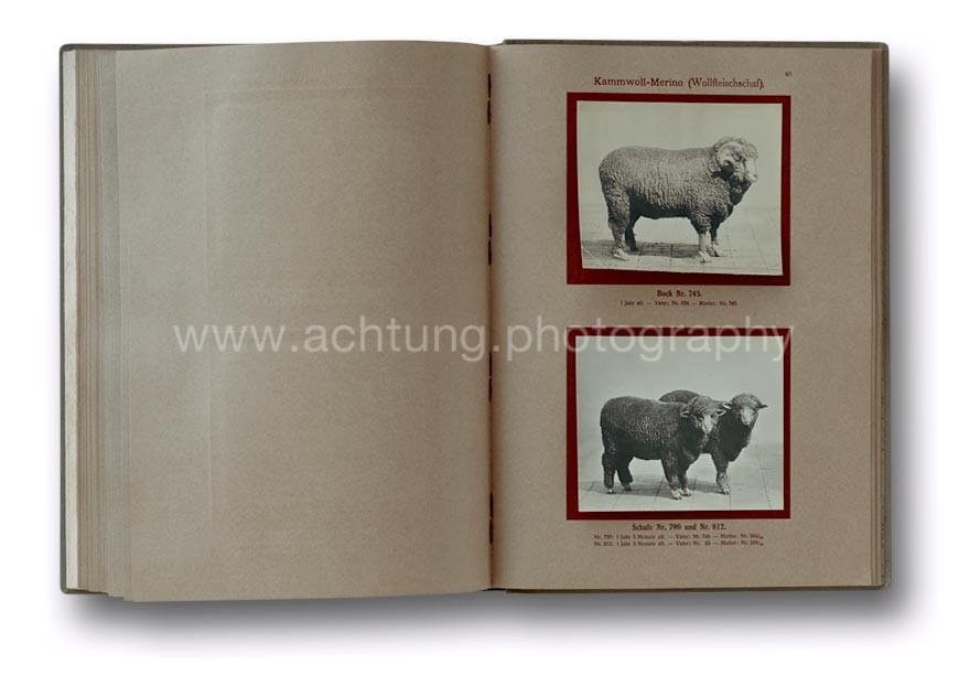 Deutsche_Tierrassen_1912_44