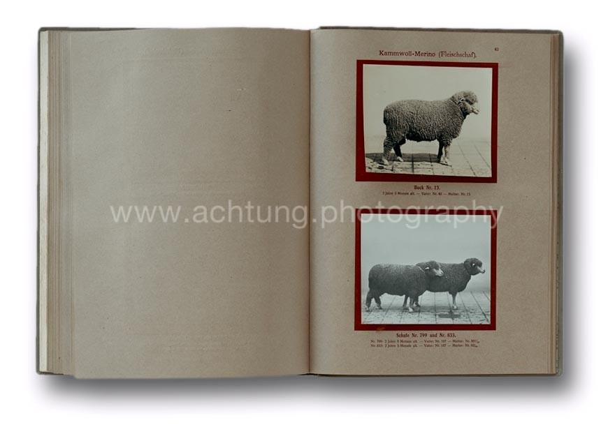Deutsche_Tierrassen_1912_46