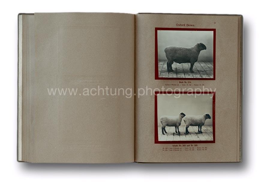Deutsche_Tierrassen_1912_49
