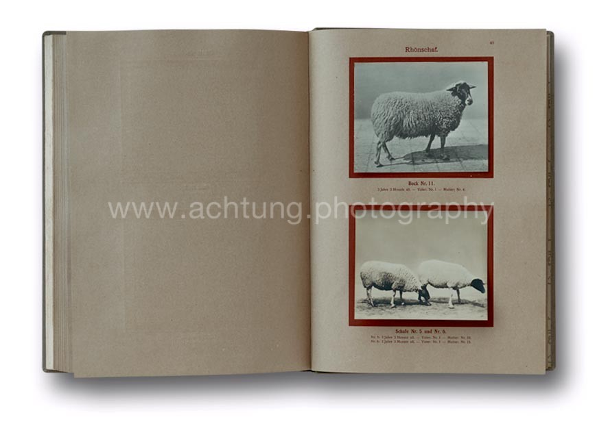 Deutsche_Tierrassen_1912_52