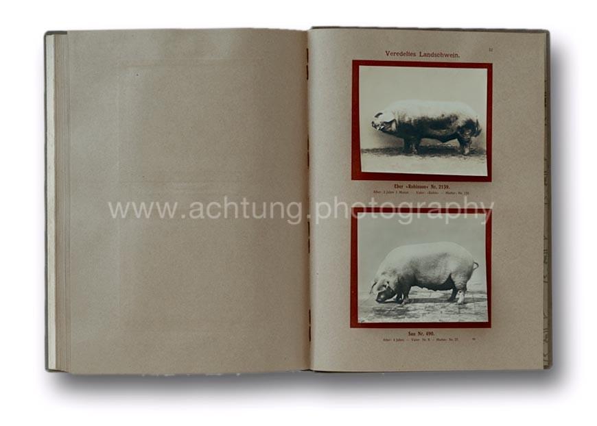 Deutsche_Tierrassen_1912_55