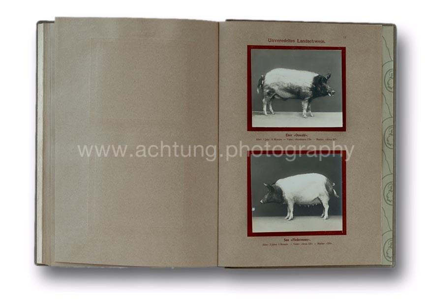 Deutsche_Tierrassen_1912_57