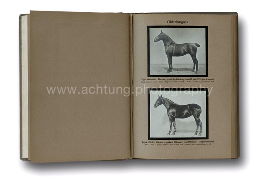 Razas_alemanas_de_Animales_1913_01
